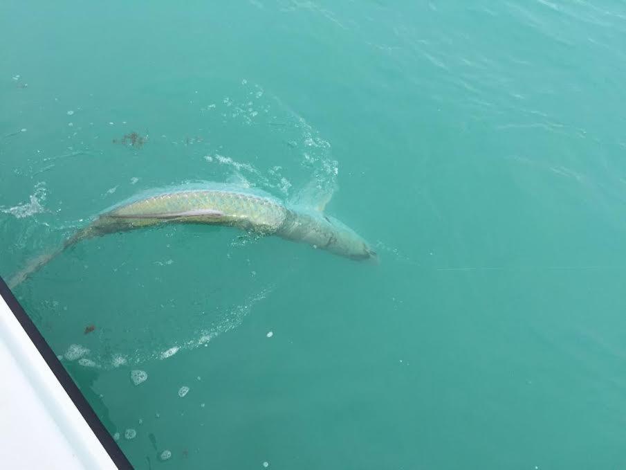 Miami fishing report inshore fishing herald for Fishing store miami