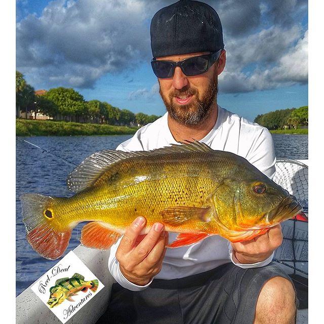 Reel deal adventures freshwater fishing fishing herald for Peacock bass fishing miami