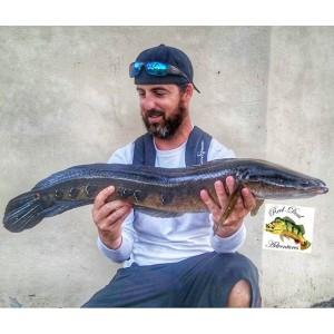 snakehead, florida