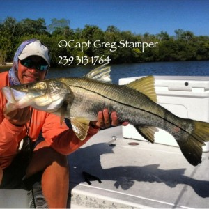 fishing charters, southwest florida