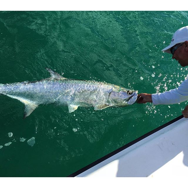 Miami fishing pictures fishing herald for Tarpon fish pictures